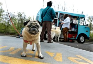 Food truck para pets faz sucesso nos EUA