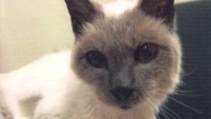 Gato mais velho do mundo morre no texas