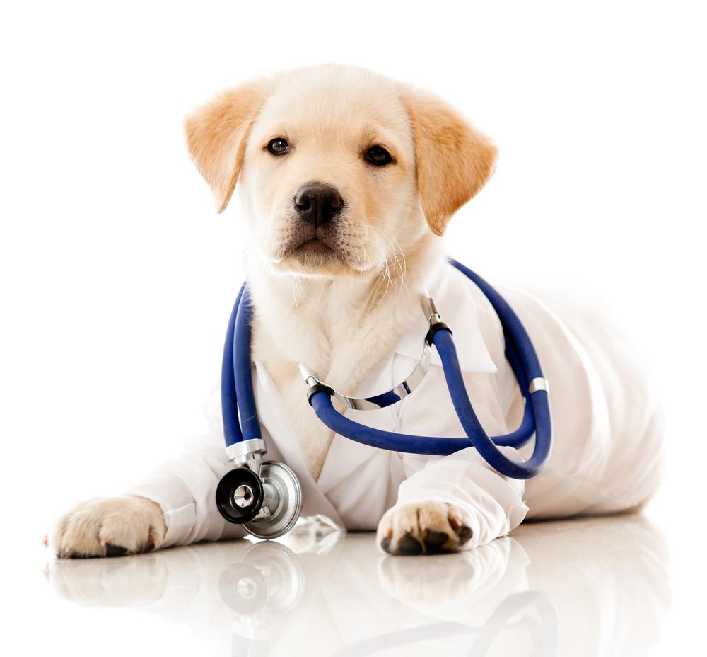Pets com câncer podem ser tratados