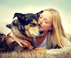 coração de cães e tutores bate no mesmo ritmo