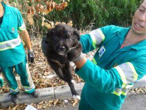 Garis salvam cachorrinho de lixo