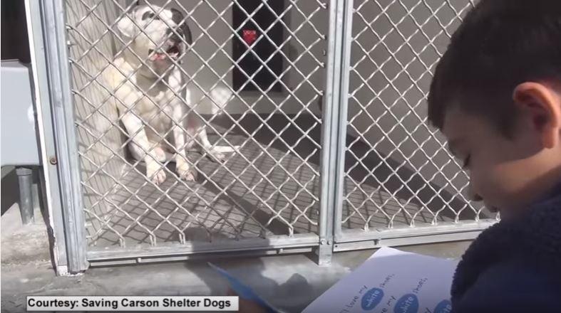 menino autista lê para cães em abrigo