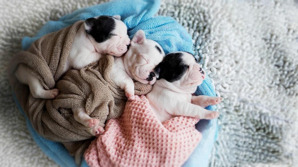 Fotógrafo clica cães com técnica newborn