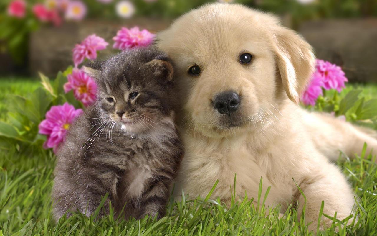castração cachorro e gato