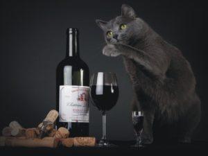 Empresa cria vinho para gatos