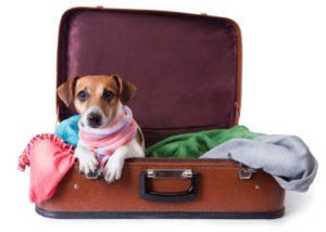Dicas para viajar com o pet
