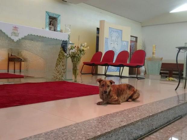 Cachorro faz sucesso brincando com frei em missa