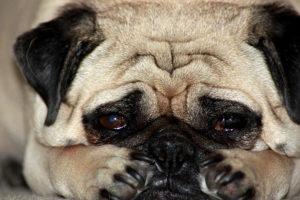 Animais também ficam deprimidos