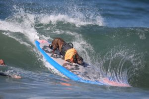 Cachorro brasileiro se destaca em campeonato na Califórnia