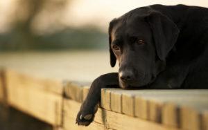 cães também podem ter problemas emocionais