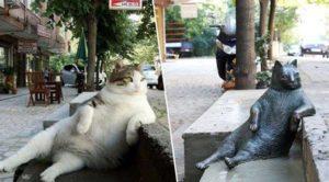Gato ganha estátua na Turquia