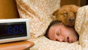 Pets também são afetados pelo horário de verão