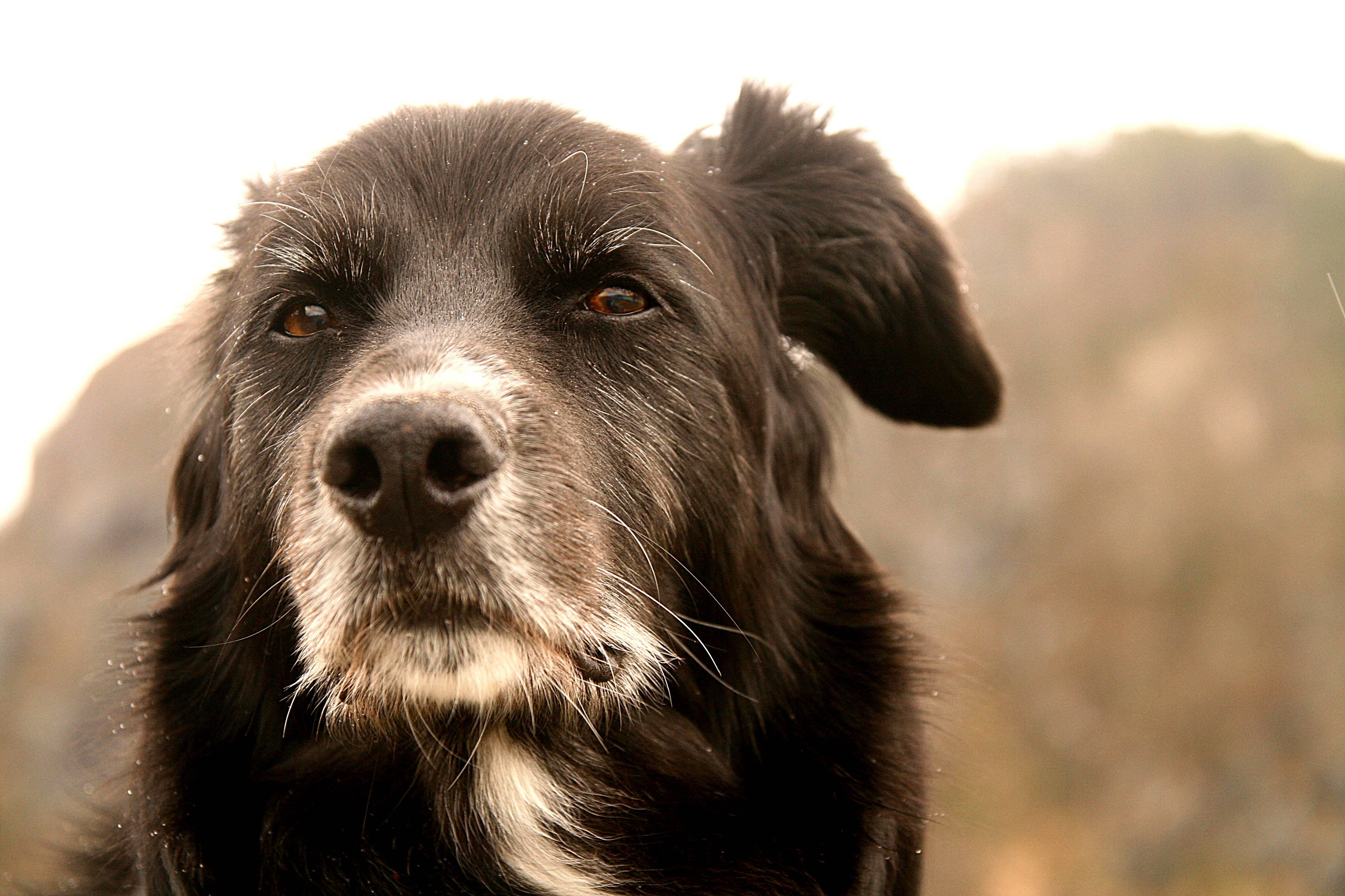 estresse pode causar pelos brancos em cachorros