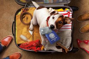 pets precisam de cuidados de saúde para viajar de férias
