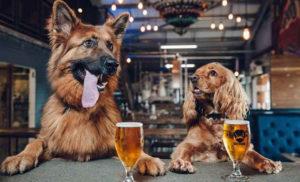 Cervejaria permite que funcionários tirem licença para cuidar de animais de estimação