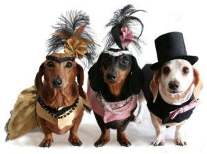 é preciso cuidado ao pular carnaval com cachorros