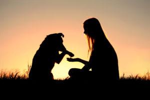Adoção de animais é séria e envolve planejamento