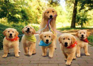 passeio tranquilo com cachorros