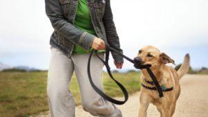 como evitar que cachorros puxem durante o passeio