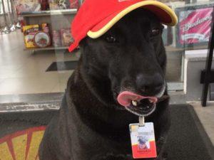 Cachorro abandonado foi adotado por posto de gasolina