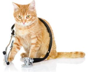 cuidados com a saúde dos gatos
