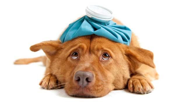cuidado com itens que podem prejudicar a saúde de cães e gatos