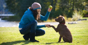 treinar cachorro para ser mais obediente