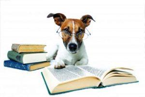 como ter cachorro mais obediente