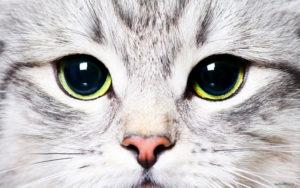 O que você não deve fazer com o seu gato