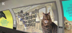gatos substituem propagandas em metrô