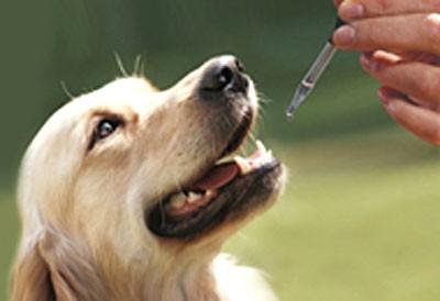 Homeopatia é segura para animais