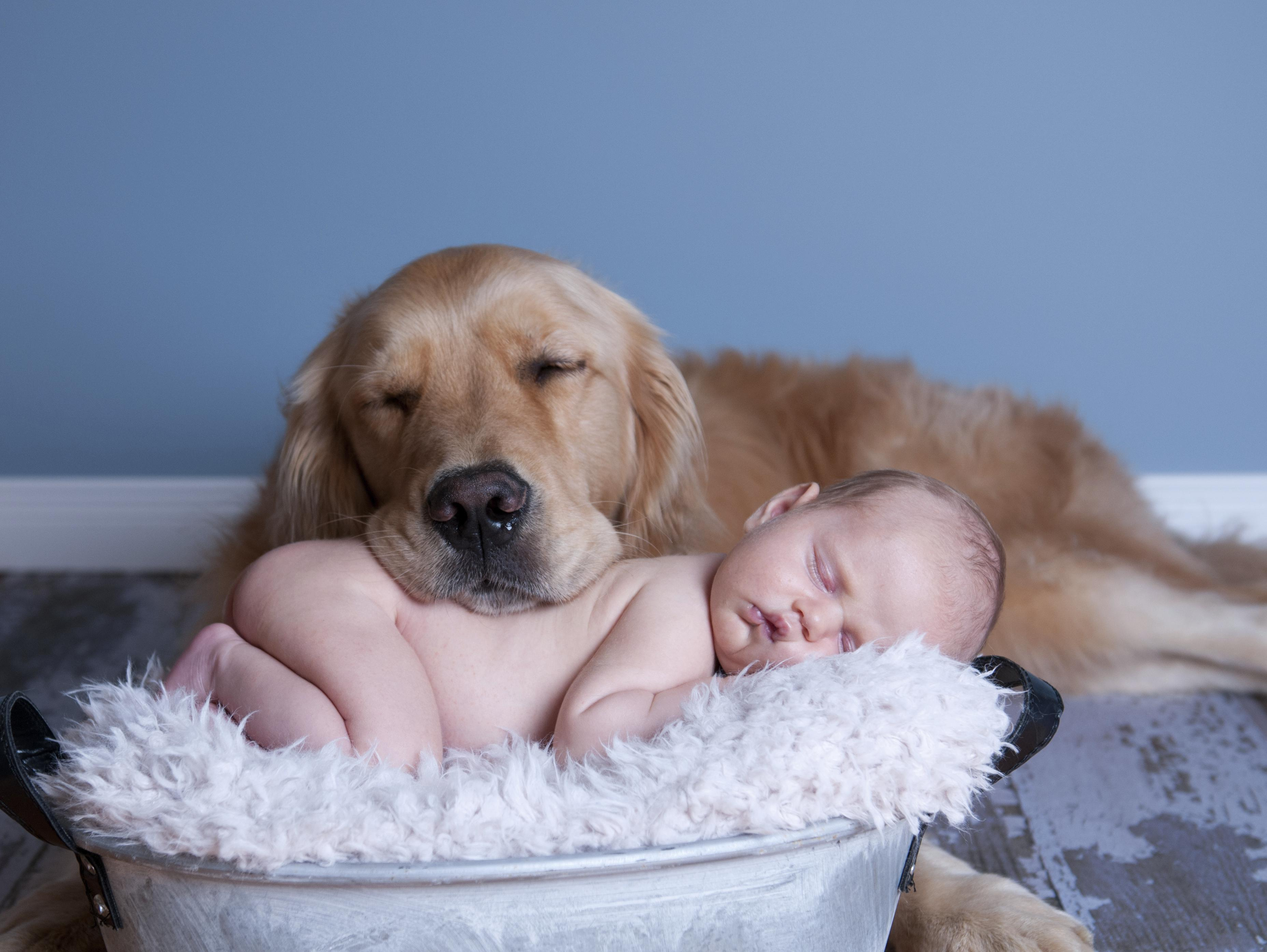 como adaptar o pet à chegada de um bebê