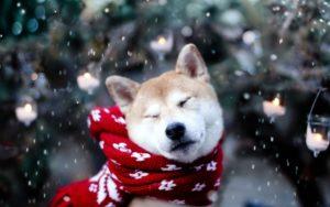 cuidado com cachorro e gato inverno