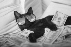 Lucky gato preto dá sorte