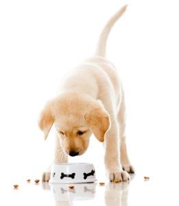 dicas para alimentação cachorros