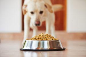 cuidados com a alimentação de cachorros