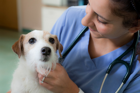 Cabify ajuda ong de cachorros terapeutas