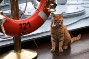 Gato serve em operação russa na Síria
