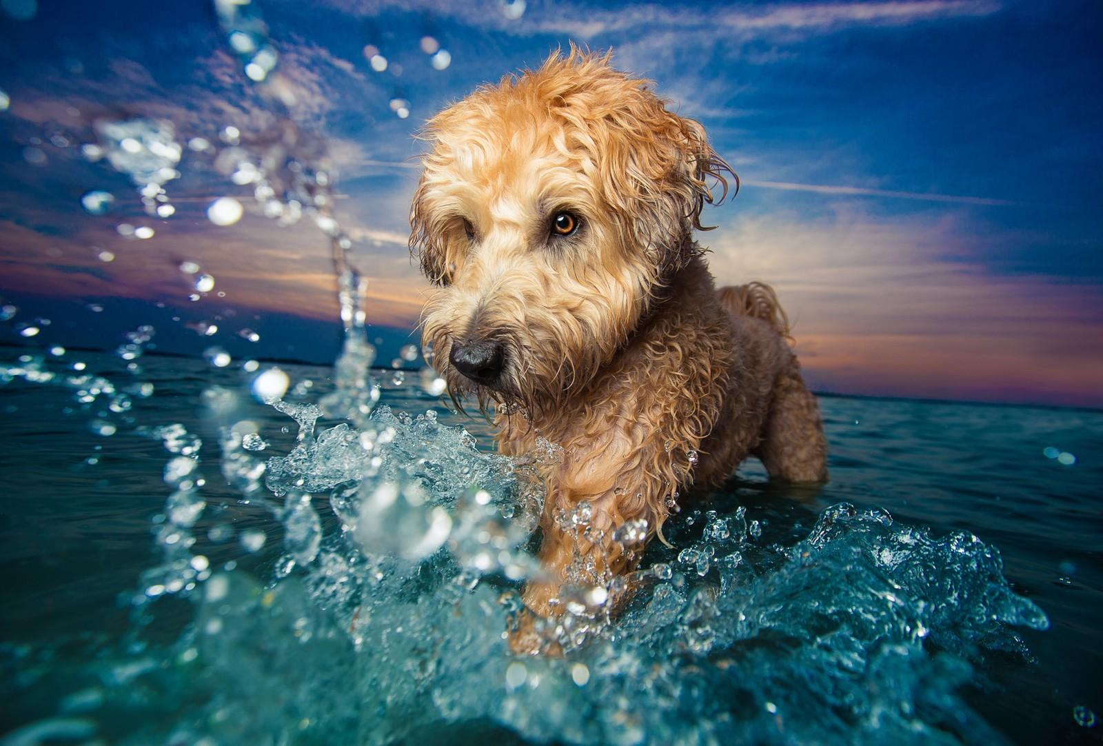 concurso anual fotografia de cães