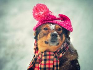 cuidado com animais no inverno