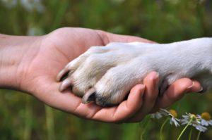 como lidar com a morte de cachorros e gatos