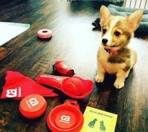 Empresa estimula adoção de cachorros e gatos