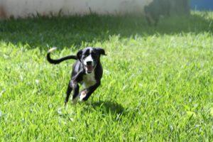 Cachorros disponíveis para adoção PUCPR