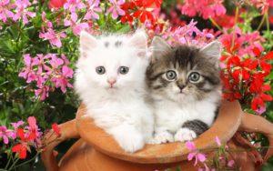 cuidados pets primavera