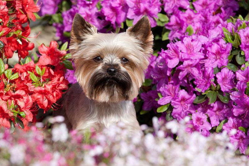 cuidados com cachorros e gatos na primavera