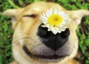 Gatos e cachorros necessitam de cuidados específicos na primavera