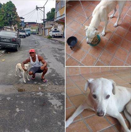 homem adota cachorro que fez xixi nele