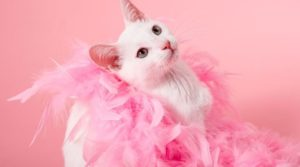 câncer de mama também acomete cachorros e gatos