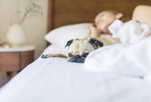 vínculo entre pets e pessoas doentes é maior