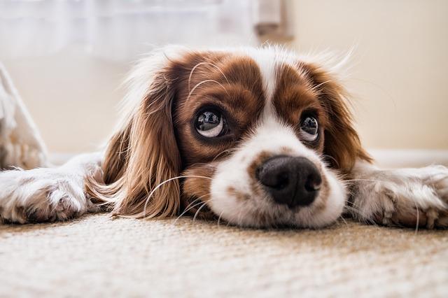 sinais de que o cachorro está com verme, conexão pet